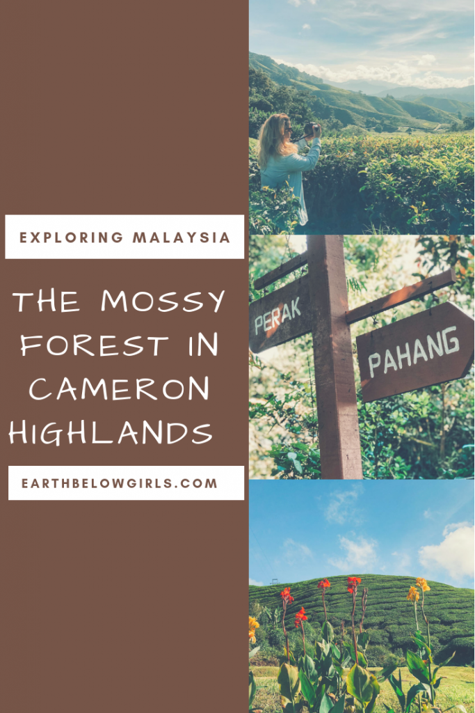 Exploring the Mossy Forest Cameron Highlands, Malaysia