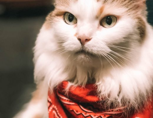 Visiting Calico Cat Cafe in Tokyo