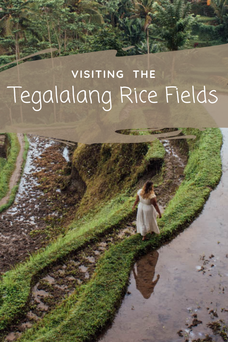 Sunrise in the Tegalalang Rice Fields of Ubud | Bali