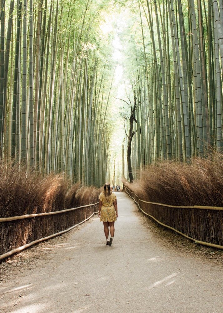 Bamboo Forest Kyoto Guide | Japan